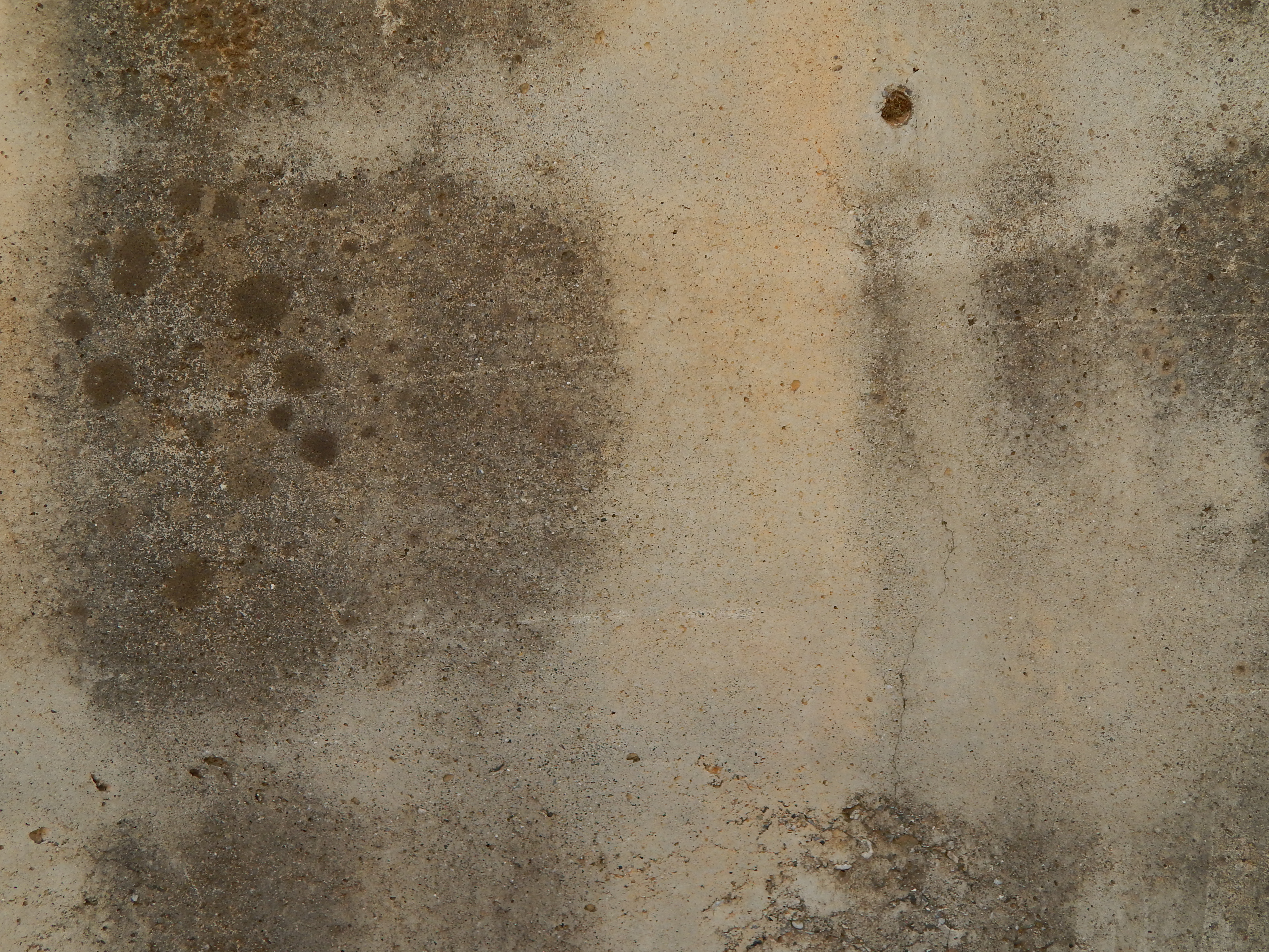 Top 5 Best Mold Removal Companies in Montgomery, AL